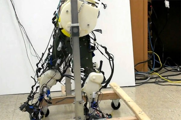 robotic legs simulate our neural system lurch along in the
