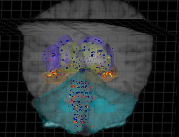 Allen Institute completes gene expression map of the human brain in highresolution 3D