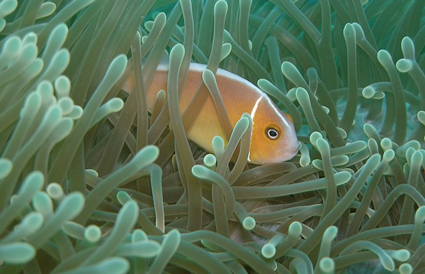 Scientists estimate at least one third of marine species remain unknown to humans