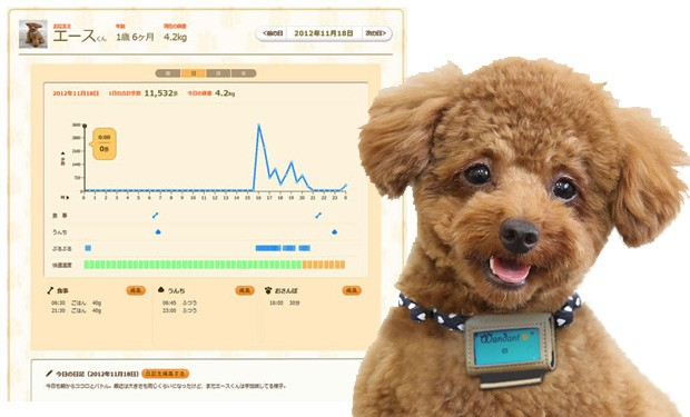 Fujitsu's Wandant dog pedometer tracks your pet's moves, uploads it to the cloud