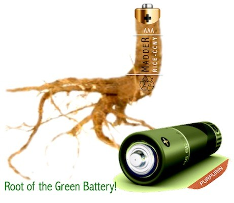 DNP Scientists develop eco battery powered by rootextracted dye