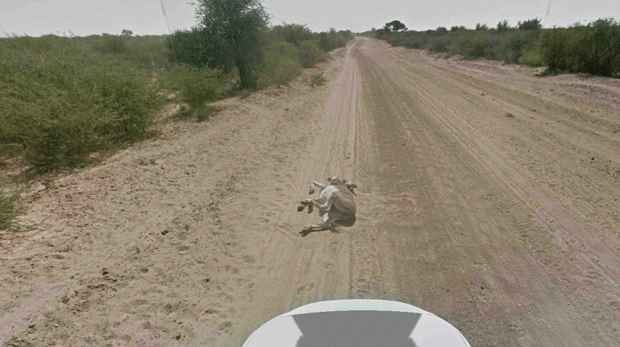 Google it's cool guys, we didn't run over a donkey