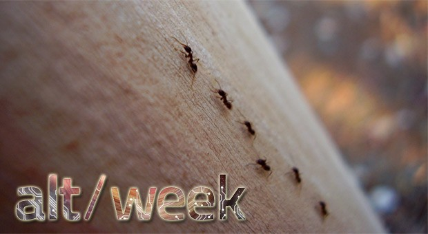 Alt-week 4.13.13: micro-LED mind control, clear brains and clairvoyant ants