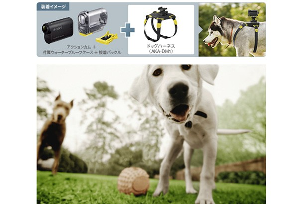 DNP  Sony's AKADM1 harness mounts lets Japanese dogs in on the action cam trend