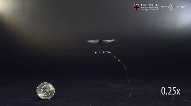 Harvard University's robotic insect takes its first controlled flight video
