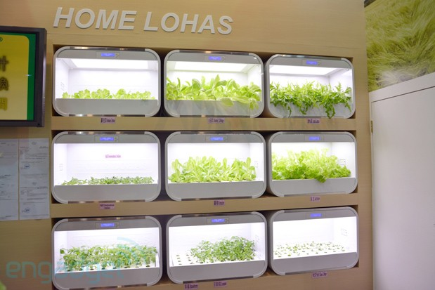 Home Lohas brings hydroponic plantation to your living room