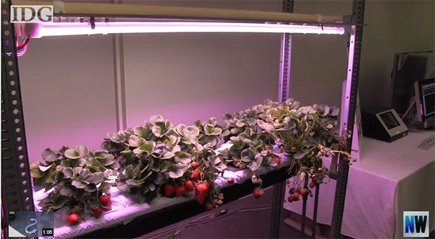 Sharp branching into robovacs, grow lights, ewhiteboards to offset slow panel sales