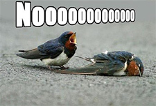 bird-nooooooooooooo-dsf.jpg