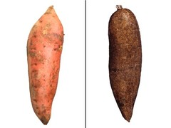 sweet-potato-yam-getty-jupiterimages-456_240x180.jpg