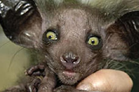 ugly animals images. Baby Animals That Aren#39;t Cute