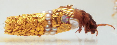 duprat2 Caddisfly larvae show jewellery designers how 'it' is done