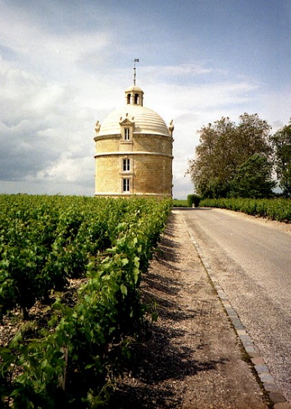 Vineyard detail