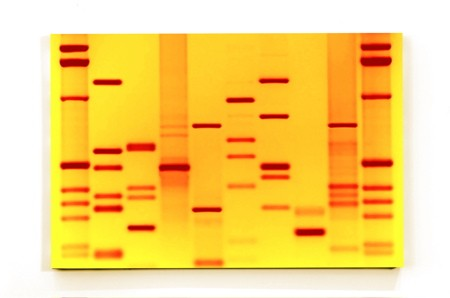 Bright Yellow DNA!