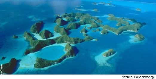 Rescue the Reef in Palau