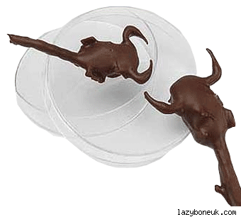 Chocolate Covered Scorpions