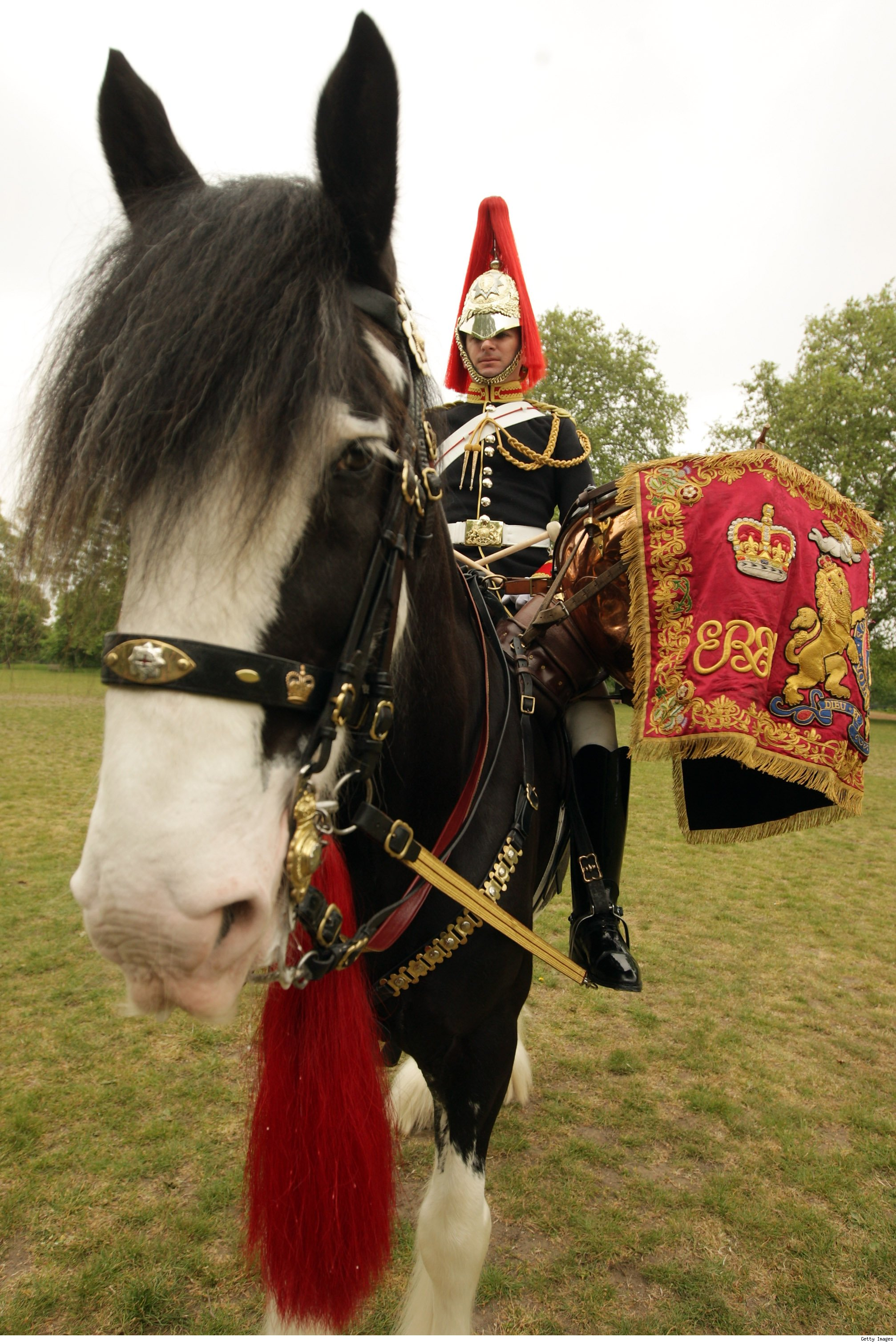 A Horse In The Highland Cavalry