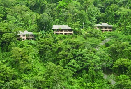 The resort is perched in a primal rainforest
