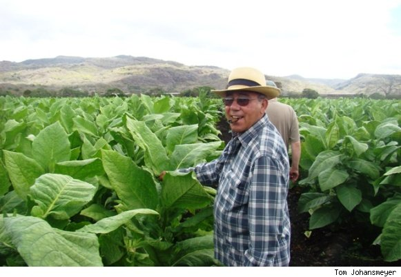 Pepin Garcia and Eddie Ortega Viewing Tobacco Leaves