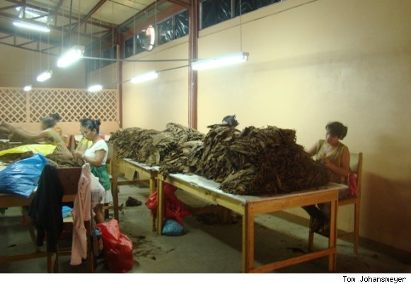 Cigar Manufacturing Operation at My Father Cigars in Nicaragua