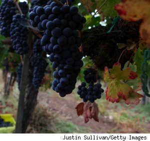 grapes in napa