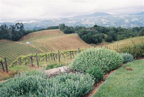 Shadick Vineyard
