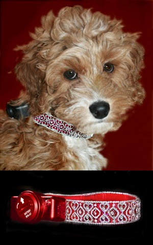 petsafe diamond dog collar