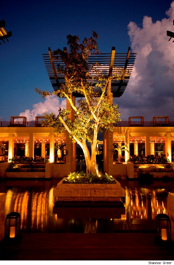 A live banyan tree grows on and island that the lobby and restaurants are built around.