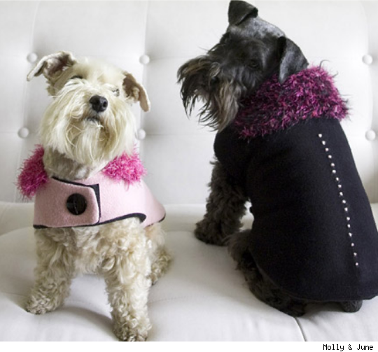 Molly and June Dog Apparel Boutique