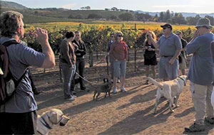 kunde winery dog tour