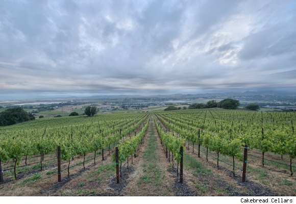 A Cakebread Cellars vineyard