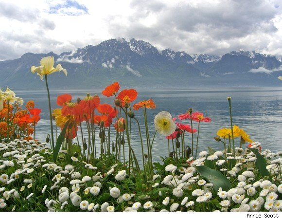 Poppies and Lake Geneva