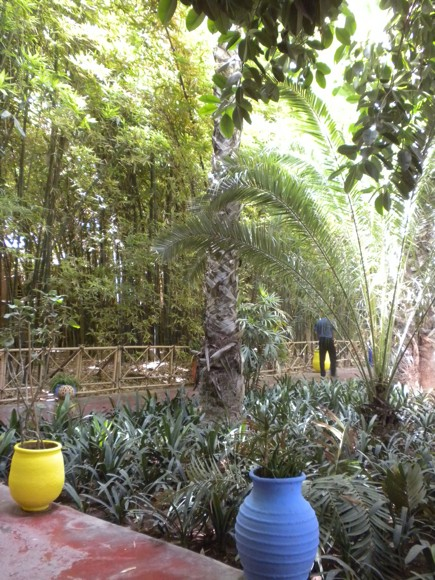 Lush greenery at Jardin Majorelle