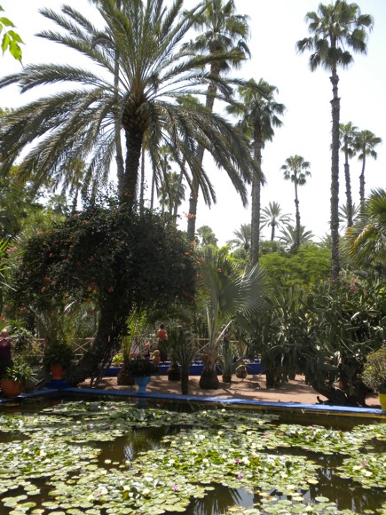 Jardin Majorelle Views