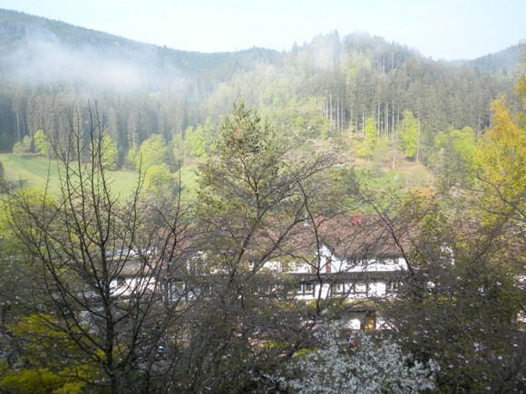 Misty Morning in the Black Forest