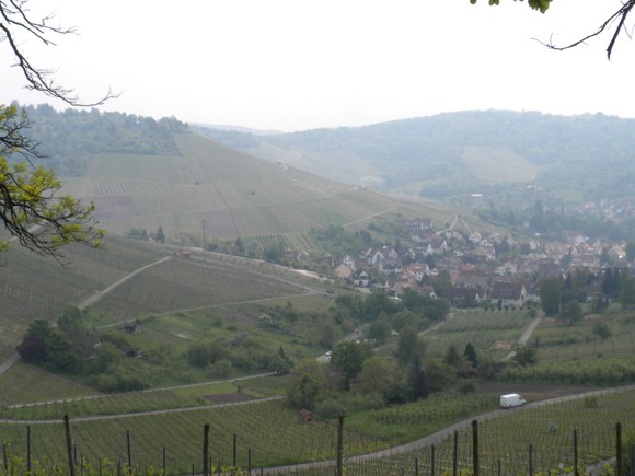 Rolling Countryside (with Vineyards) Inside Stuttgart