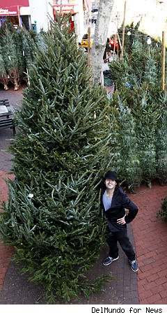 NYC Street Vendor Hawks $900 Christmas Trees