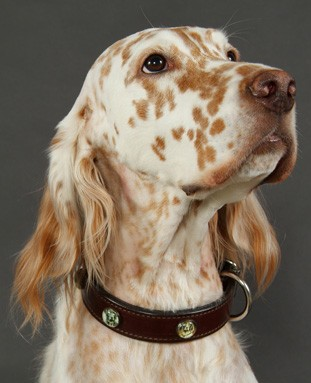 Dog Collar with Rosettes