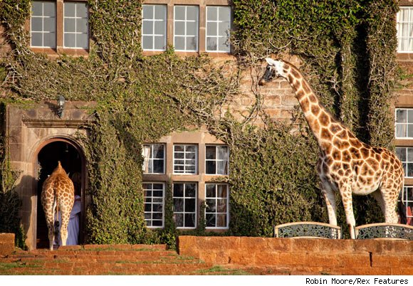 Giraffe Manor in Nairobi Kenya