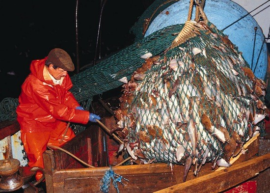 seafood guide, overfishing