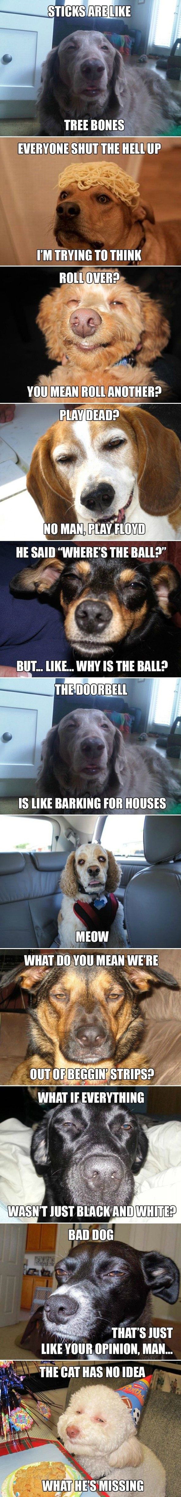 funny-meme-high-dogs.jpg