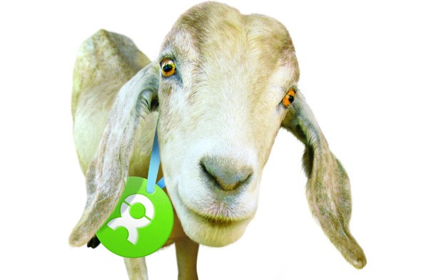 Oxfam Unwrapped goat
