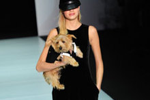 Catwalk Review: Emporio Armani a/w 2011/12