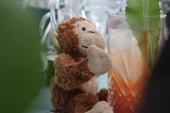 A monkey samples the Singapore Sling Punch