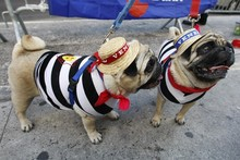 PICTURES: Dogs dress up for Halloween!