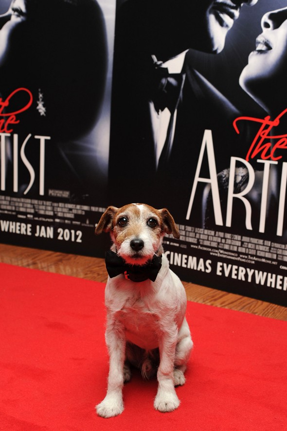 Doggy style: Actor pup Uggie dons bow tie for The Artist red carpet