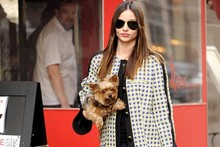 Miranda Kerr has an adorable dog (to go with her adorable husband, baby, etc)