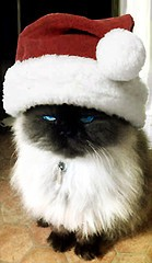 strop, kitten in a santa hat