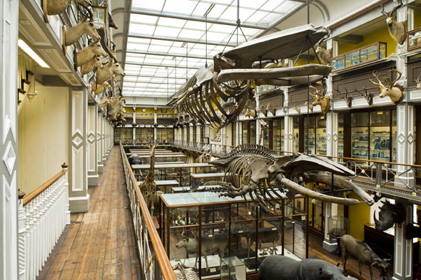 Museum of Natural History, Dublin