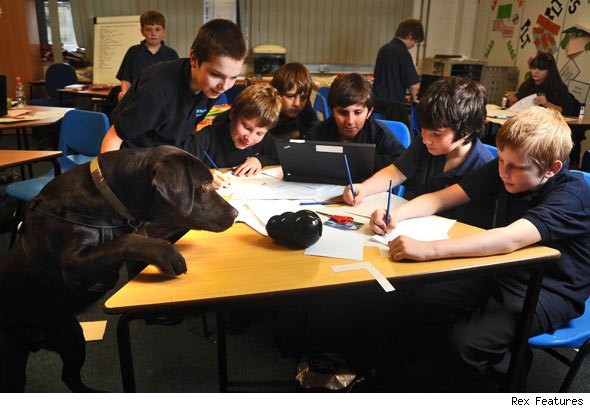 Oscar, dog, school