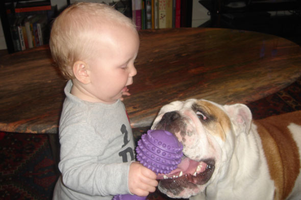 The Newborn Diaries: Bulldog vs. baby